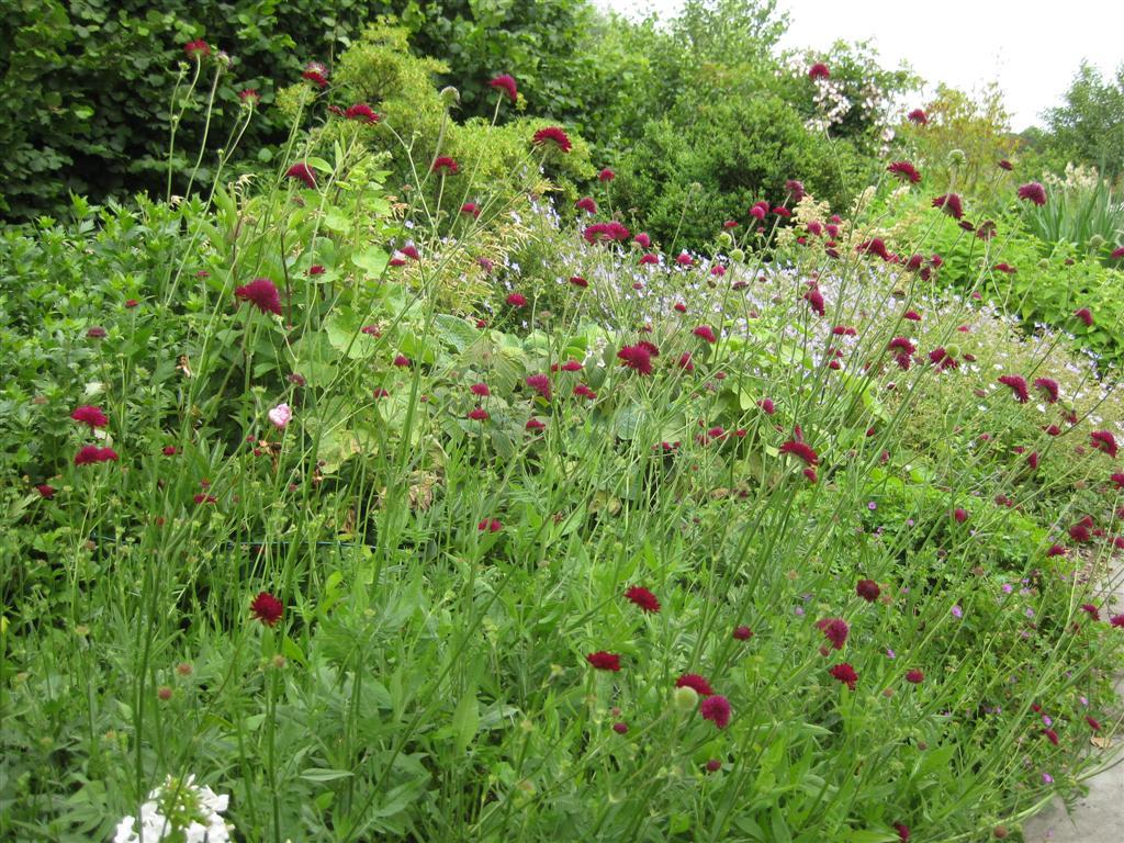 The garden wanderer wim van wassenhove s garden belgium for Garden trees b q