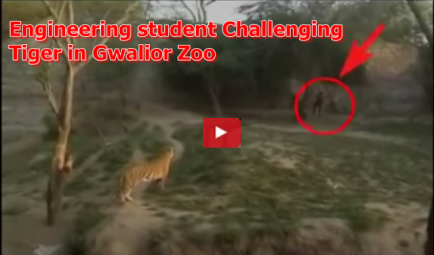 Engineering Student Challenging Tiger in Gwalior Zoo | Watch Video