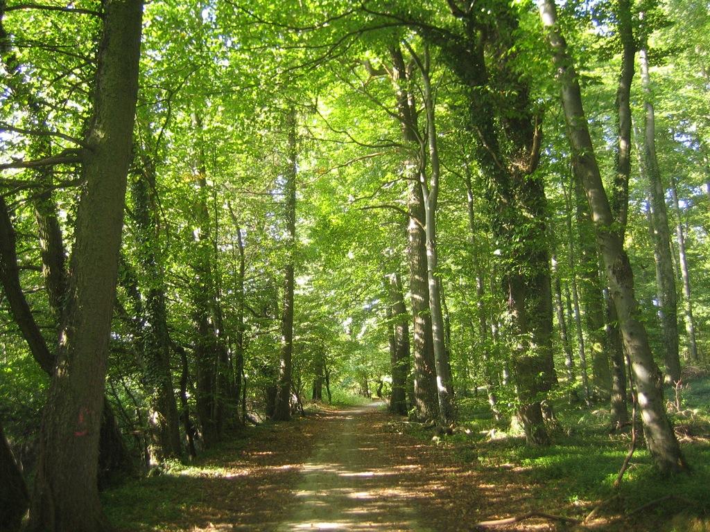 Licencia art stica bosque for Tipos de arboles y su significado