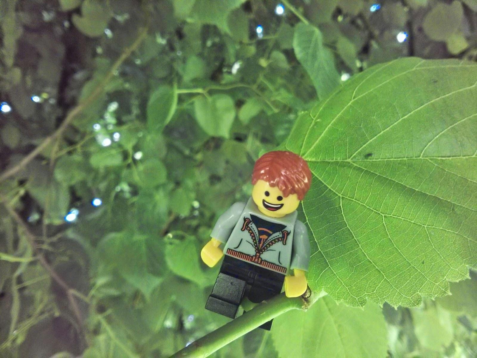 Kyle Emmett climbing a tree