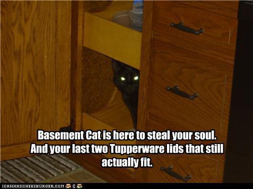 starring basement cat krissthesexyatheist