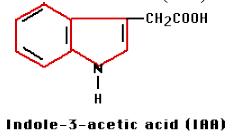 Rumus kimia auksin
