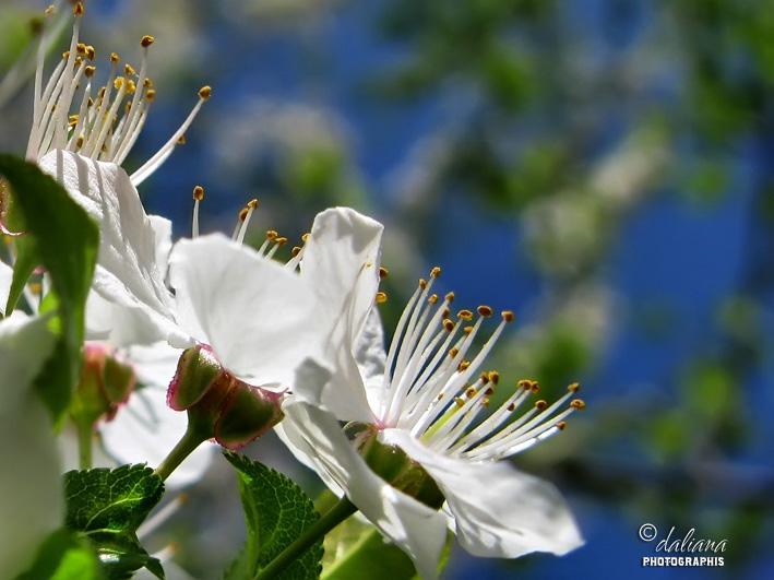 http://2.bp.blogspot.com/-hL7CqFKRhDo/T4FnfNuI-gI/AAAAAAAAJGo/29u9lfZRHE8/s1600/flori-spring.jpg