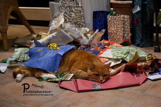 Katzendame Mimi an Weihnachten nach der Bescherung