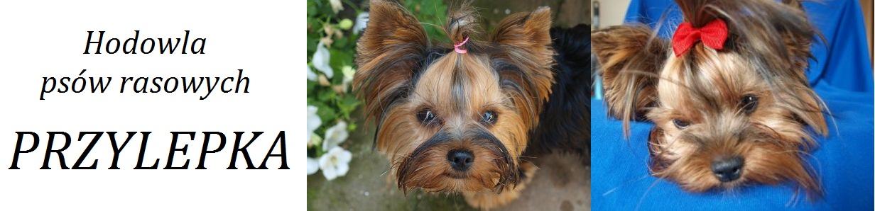 Hodowla psów rasowych PRZYLEPKA