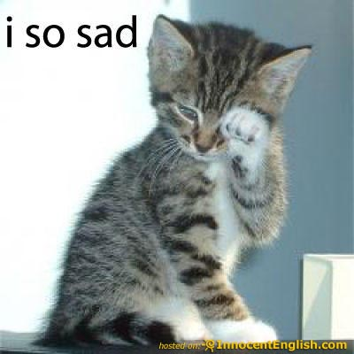 lol cat sad