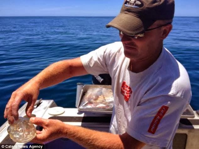 Ikan Transparan Pemancing