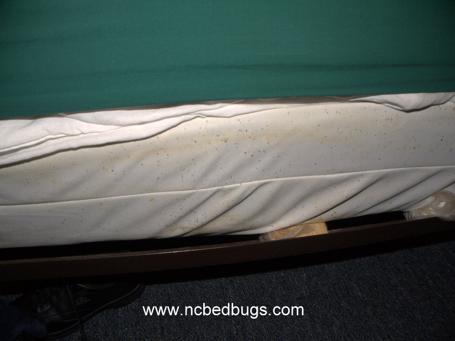 Gallery For Bed Bugs Signs Mattress
