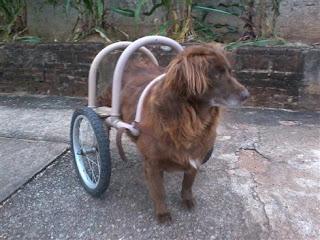 Kate e sua cadeira de rodas