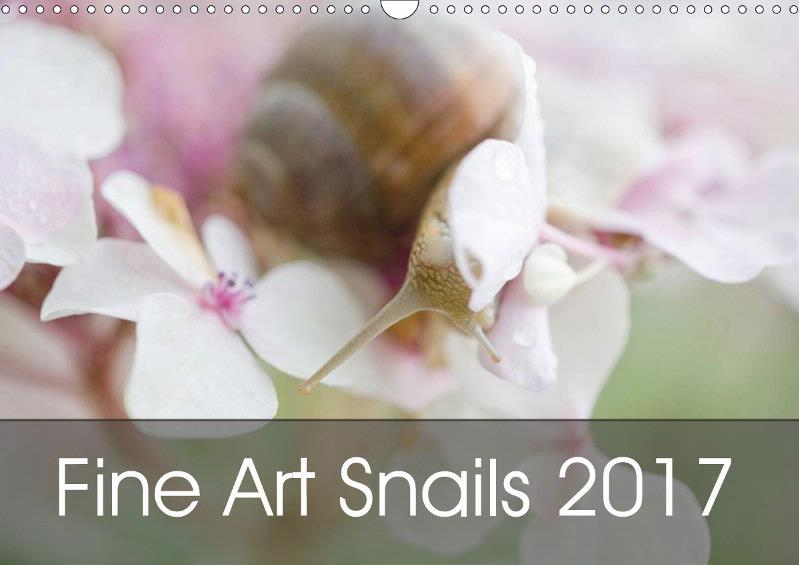 My new Fine Art Snail Calendar 2017 is now available !!! Everywhere in Europe !!