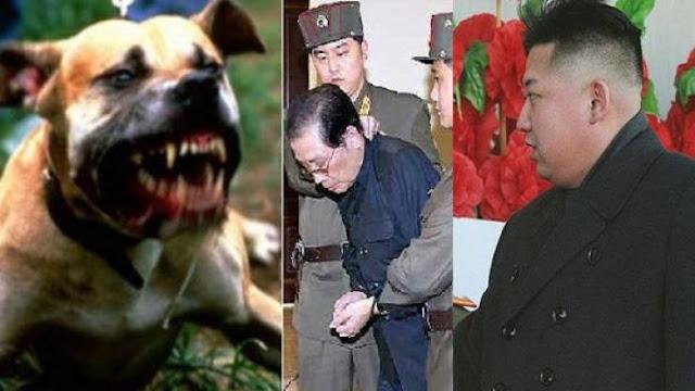بالفيديو  أغرب حالات الاعدام التي أمر بها الزعيم الكوري!