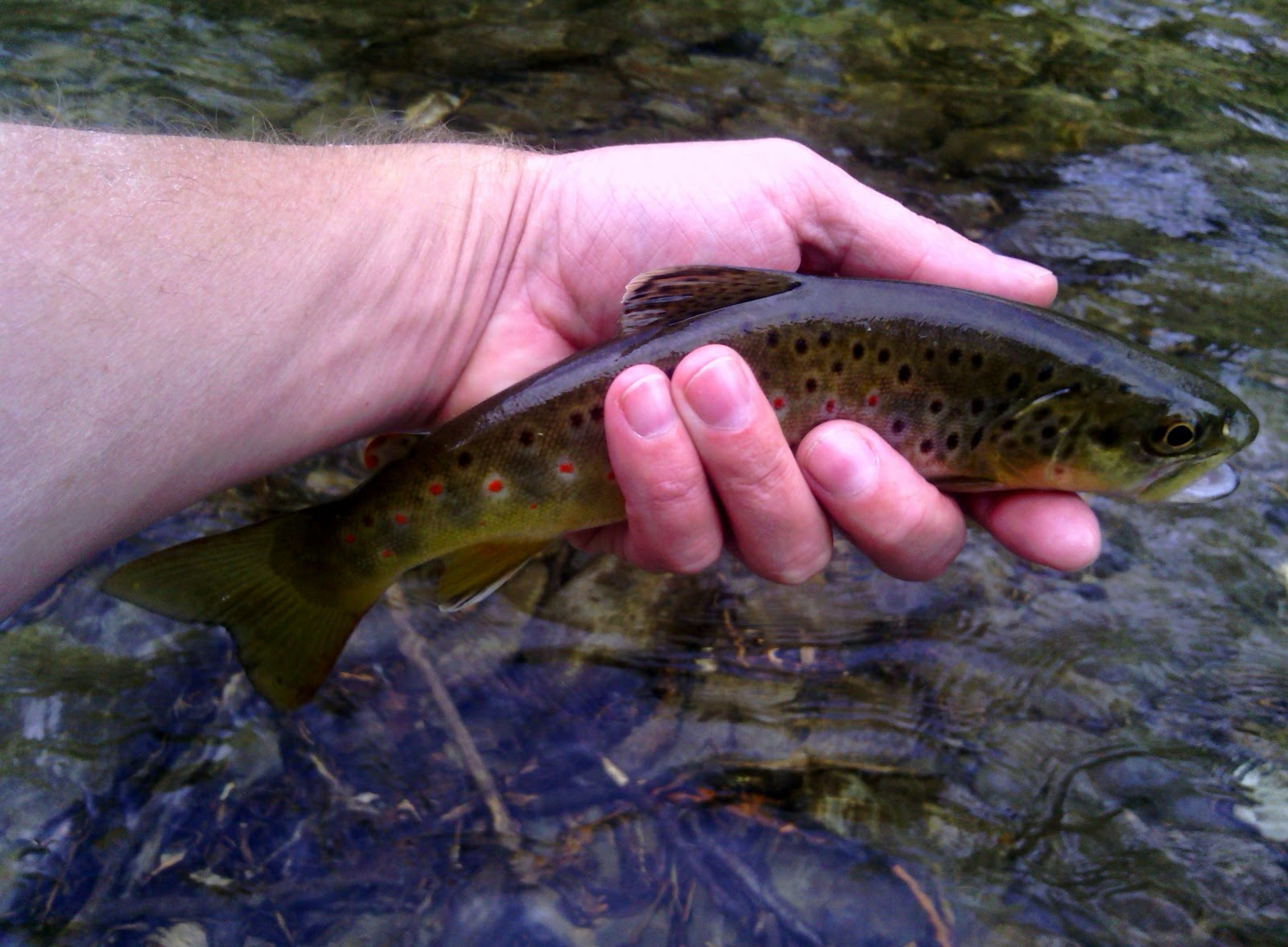 Tennessee fly fishing smoky mountain spring saftey tips 2013 for Smoky mountain fly fishing