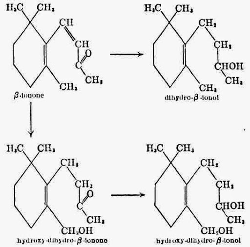Biological oxidations and reductions of β-Ionone