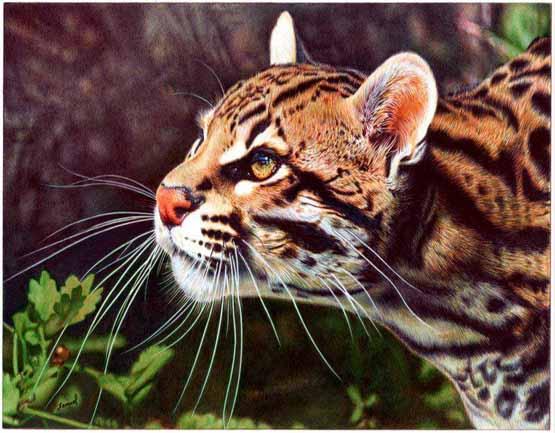 رسم نمر بالألوان الخشبية
