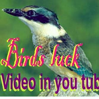 Birds Luck Colorful Video in you tube