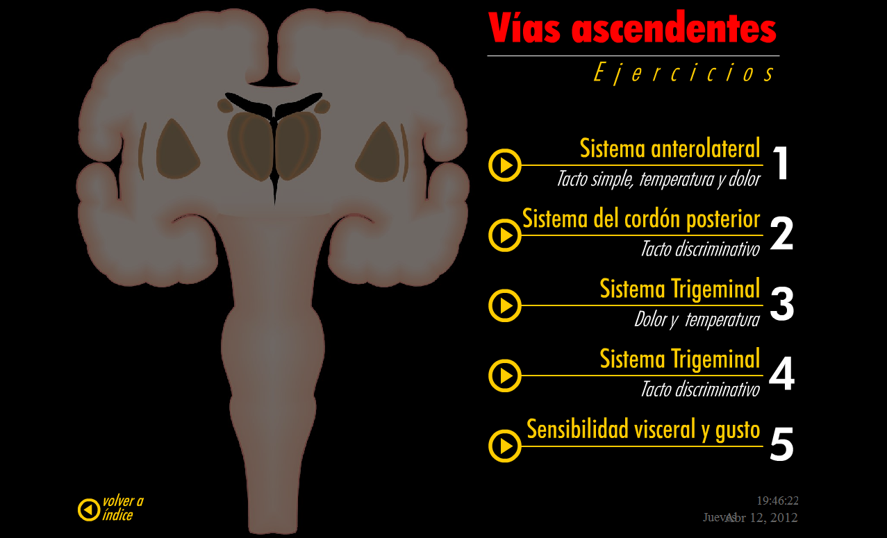 Anatomía 2012 - Ayudante Pablo Prado: Vías Ascendentes y Descendentes