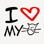 yo amo gato
