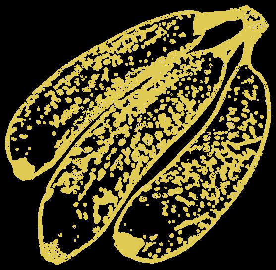 バナナ2(フルーツ)