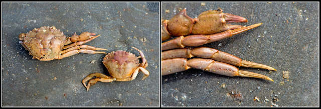 Dead; Death; Crab; Future Fossils; Decay