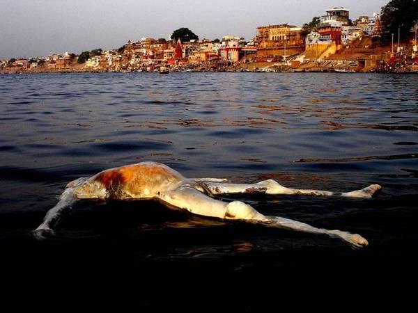 As Maiores Curiosidades Do Mundo Fotos Das Margens Do Rio Ganges Na Ndia