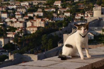 Pontos turísticos felinos