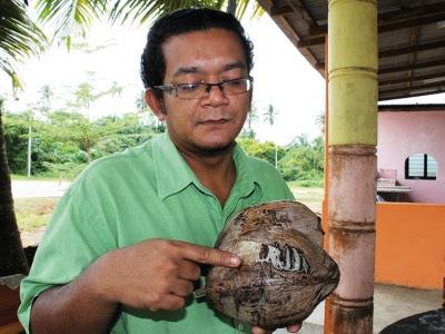 kelapa ada kalimah Allah