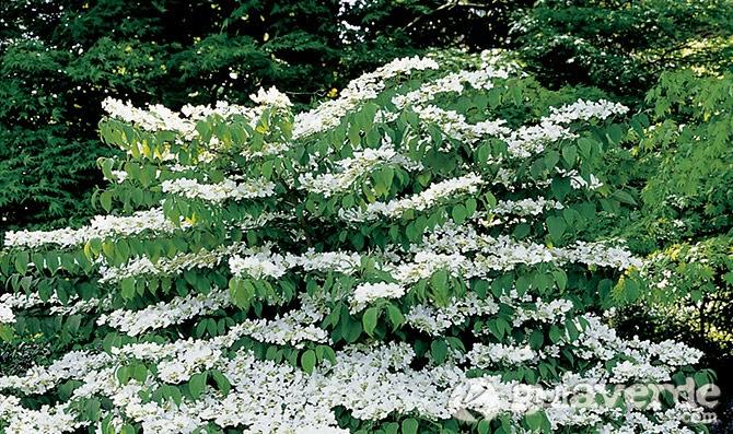 Arte y jardiner a plantas perennes medianas for Plantas perennes exterior
