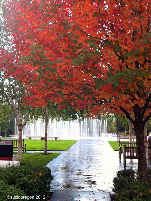 Rainy Beaverton park