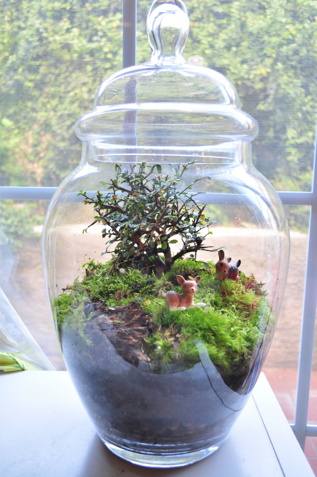 Terrarium Amp Timmy New Terrariums On Etsy