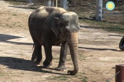 shanthi la elefante que toca una canción en la armónica