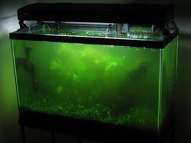 Modern Lighting Systems Freshwater Aquarium and Algae Probles