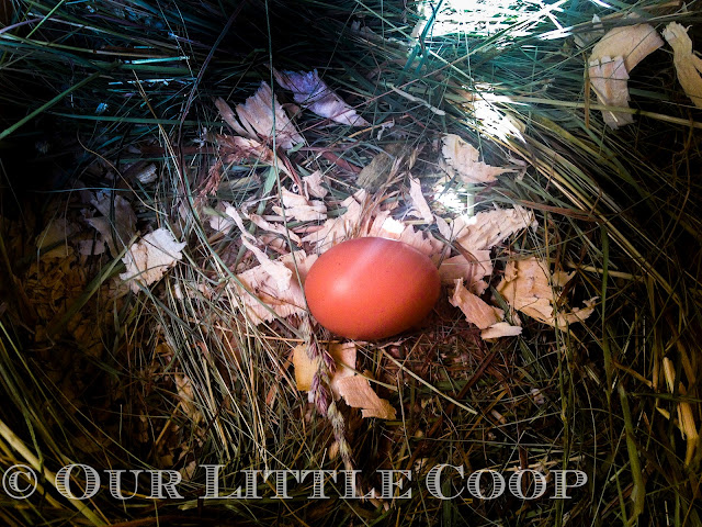 egg, outside, how, long, keep, store