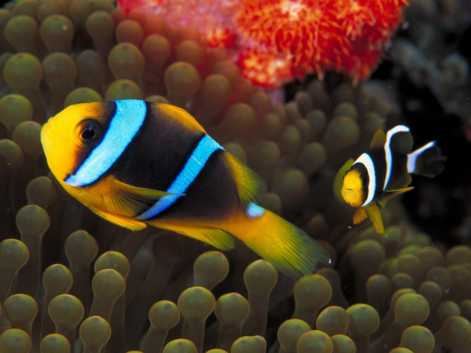 under the sea fish wallpapers - photo #45