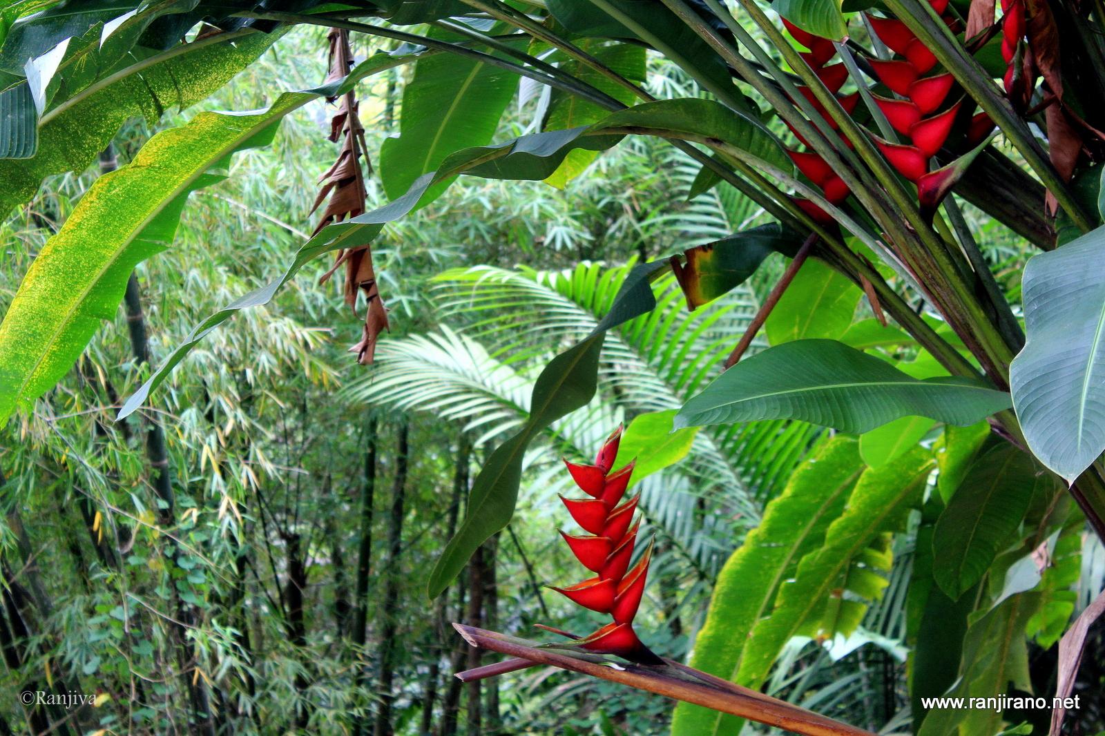 L 39 le aux fleurs et ses magnifiques oiseaux colibris for Au jardin des colibris avis