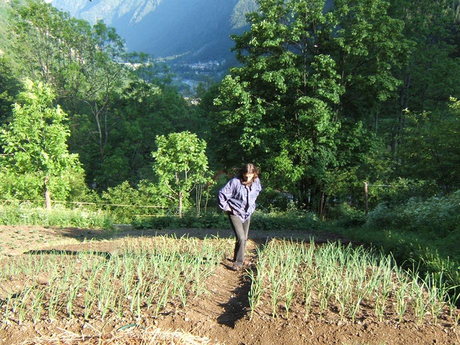Orto delle piane agricoltura naturale di montagna for Coltivare cipolle