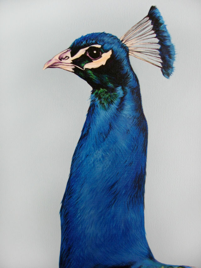 Scott Zaragoza, peacock painting