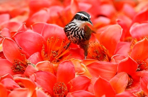شاهدوا بالصور أجواء الربيع برفقة العصافير الملونة والجميلة