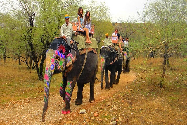 Elefantastic,Jaipur,Rajasthan