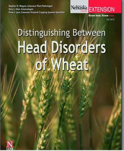 تحميل كتاب - أمراض القمح