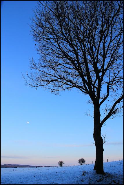 Balade avec la lune