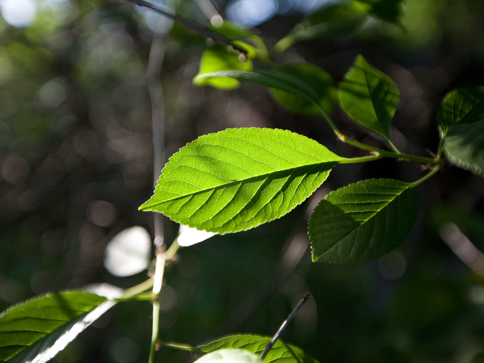 http://2.bp.blogspot.com/-hPt5W9vvDoE/T0AEj--k7ZI/AAAAAAAAGWU/2d29DJbkW-M/s1600/Nature+Wallpaper+0009.jpg