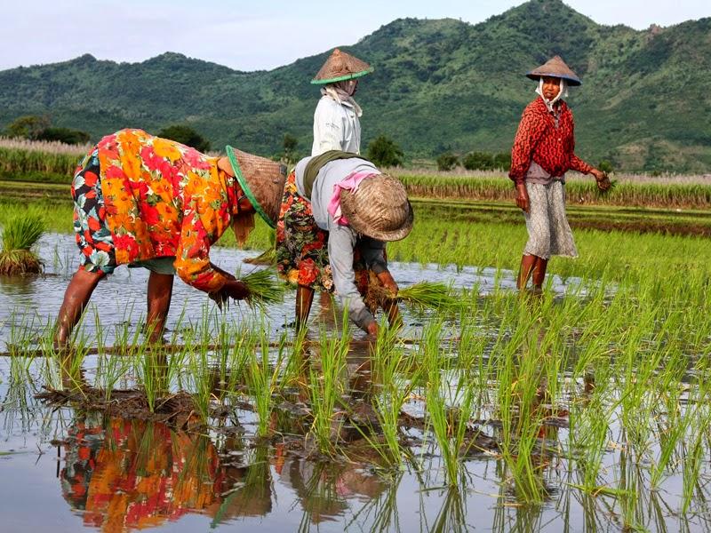 Pengertian Pertanian Secara Umum Lintas Dunia Ilmu