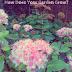 How Does Your Garden Grow -  Autumn Joy