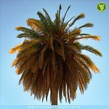 10 músicas sobre Califórnia