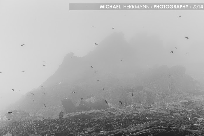 skelligs, puffins, fog, skellig michael