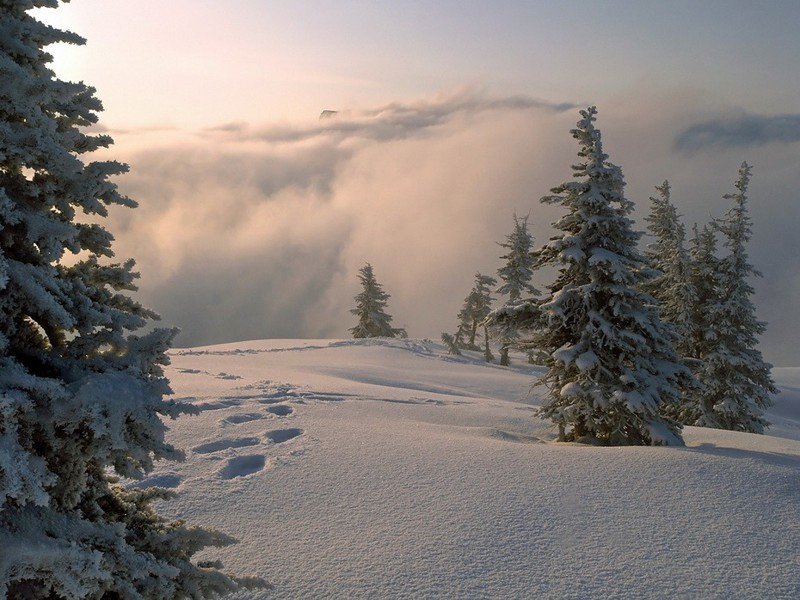 Красивые зимние фотографии (25 фото)
