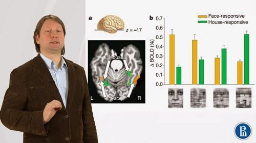 Introdução à neuroeconomia (MOOC)