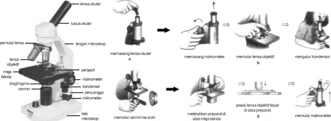 bagian mikroskop dan cara menggunakan mikroskop