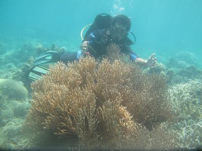 Hình ảnh khu bảo tồn Hòn Mun - Nha Trang