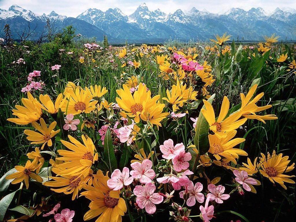 high quality flower desktop wallpapers hd desktop